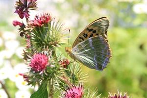 Design Hausnummer, Schmetterling, Kaisermantel, Vier Jahreszeiten, Frühling, Sommer, Herbst, Winter, Blick der Sinne, Staudt