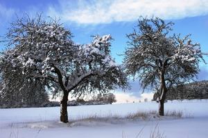 Design Hausnummer, Vier Jahreszeiten, Winterlandschaft, Blick der Sinne, Frühling, Sommer, Herbst, Winter