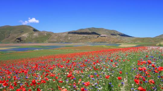 Sommer, Mohnblume, Mohnblumenfeld, Mohnblumenfelder, Italien, Marken, Piano Grande, Vier Jahreszeiten, Blick der Sinne, Landschaftsfotografie